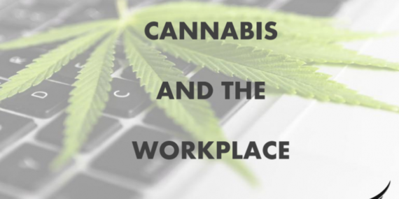 cannabis-and-the-workplace-cover-img